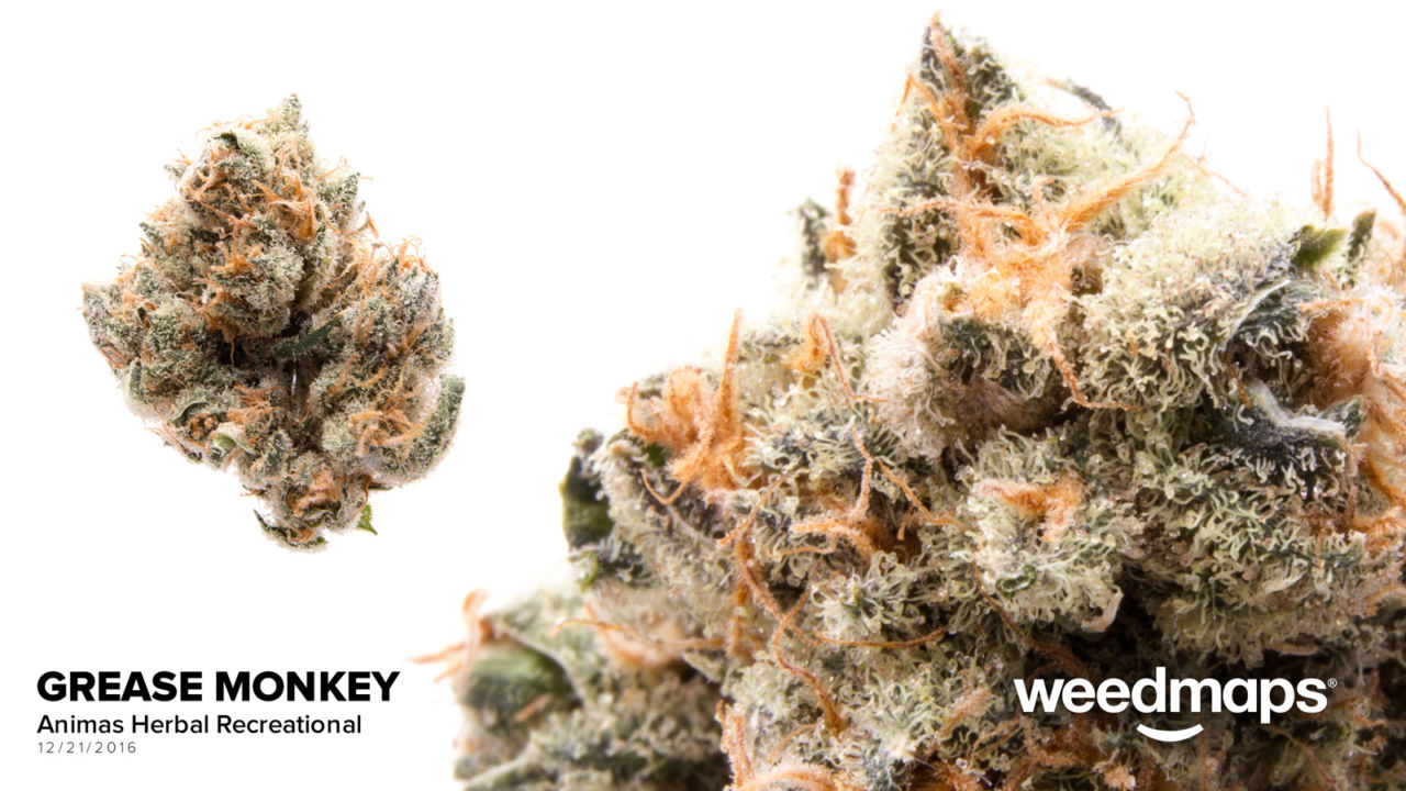 Our Strains - Animas HerbalProhibition Herb Medical